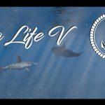 Sea Life V