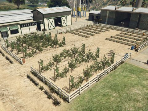 Madrazo Ranch - Outdoor planting 1.0